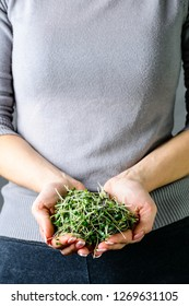 microgreen mustard sprouts in the hands of a woman Raw sprouts, microgreens, healthy eating concept and organic restaurant cooking advertisement copy space