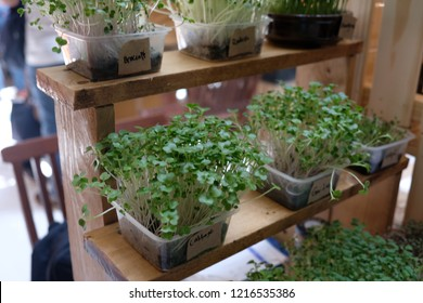 Microgreen planted in a plastic box with labels of the plant type