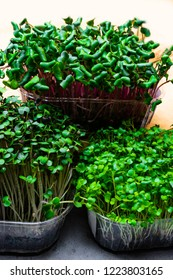 A microgreen is a young vegetable green. A microgreen or Sprouts in plastic boxes are raw living sprout vegetables germinated from high quality organic plant seeds. Fibre high greens