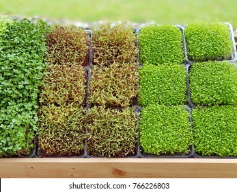 A microgreen is a young vegetable green. A microgreen or Sprouts are raw living sprout vegetables germinated from high quality organic plant seeds.