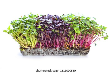 microgreens sprouts - healthy and fresh food