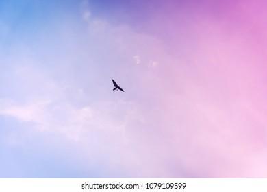 microlight flying in sky