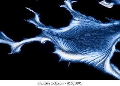 microphoto: microcrystals of ascorbic acid in polarized light