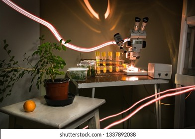 Micropropagation of plants in vitro laboratory research. Indoor houseplant of orange in a pot, test tubes with microplants. Binocular microscope sterile laminar air-flow cabinet old vintage equipment