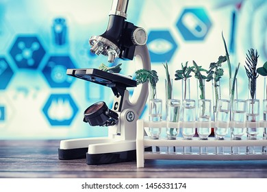 Microscope and partings on the table in the laboratory. Study on GMOs in greens.