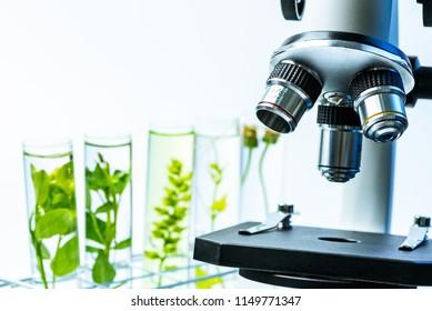 Mikroskop und junge Pflanze in der wissenschaftlichen Teströhre , Laborforschung Biochemie , Biotechnologie Konzept.