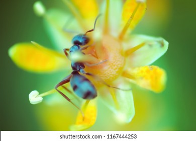 Tundra flower images stock photos vectors shutterstock microscopic flower the size of an ant attracts insects with an abundance of nectar foraging mightylinksfo