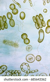 Microscopic sample of unicellular organisms. Microbiology concept