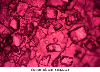 The Microscopic World. Fruit jelly under the microscope.