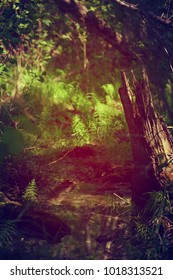 Microsite in a forest with decaying wood and ferns and horsetails