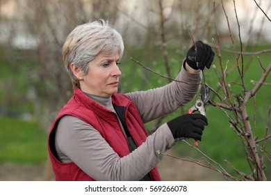 Mid adult female pruning tree in orchard selective focus on face