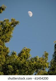 Mid-day Half Moon