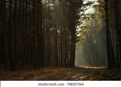 Midday sun in the woods, sunlight between the trees, forest scape. Scenery of a beautiful day in the forest, spring or summer. Landscape natural background wallpaper.