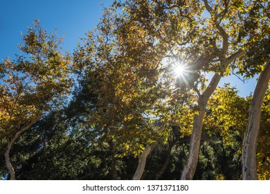Midday sunlight beams through the branches and leaves of tall waving trees.