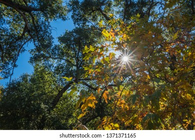 Midday sunlight shines down through the leaves of a forest canopy.