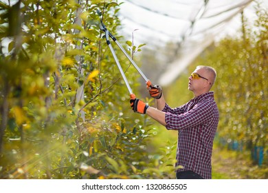 Middle adulthood man using pruning shears for cutting trees. Outdoor lifestyle activity.