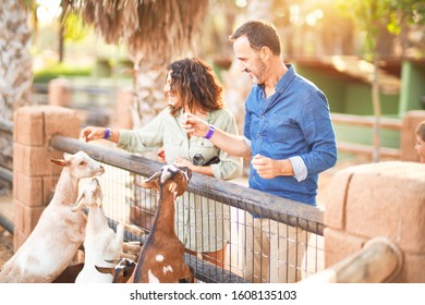 Middle age beautiful couple smiling happy and confident at town park. Standing with smile on face feeding and cuddling goats