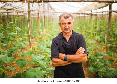 Middle age man presenting cucumbers vegetables in a greenhouse.