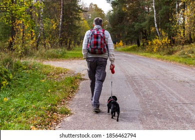 Middle age man with red checkered backpack hiking on park path with his dog black pug at autumn on natural forest background. View from back. Selective focus. Shallow depth of field. Text copy space