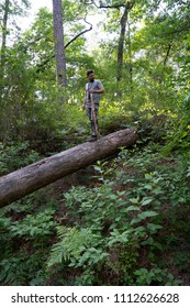 Middle age man walking on a fallen tree trunk, completing a 50 mile trek exploring new trails in the forest
