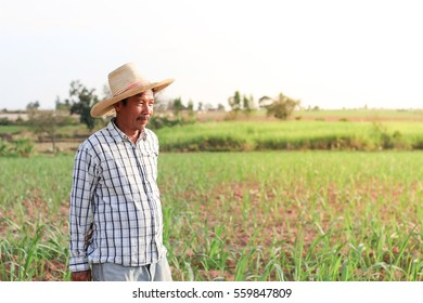 middle aged farmer standing in a field and looks into the distance