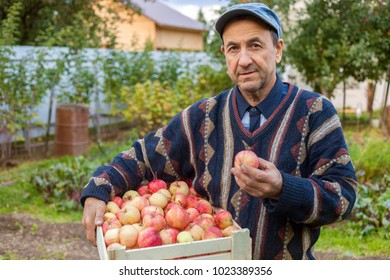 Middle aged man with wooden box full of ripe apples