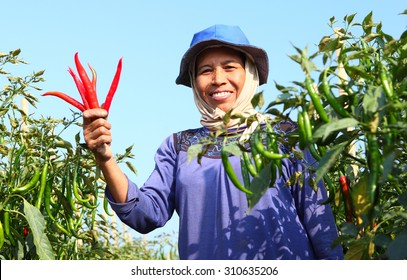 Middle aged woman farmer, with red organic chili on hand