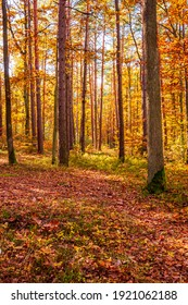 Middle of the autumn forest. Sun is shining thru colorful leaves.