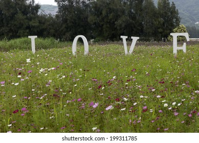 In the middle of blooming cosmos, love letters erected.