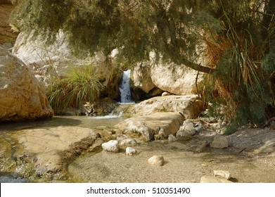 Middle East arabian scenic view. Pure brook flows in beautiful gorge Ein Gedi, in arid Judean desert on shore of Dead Sea near Masada and Qumran Caves. Place where biblical David hid from King Saul