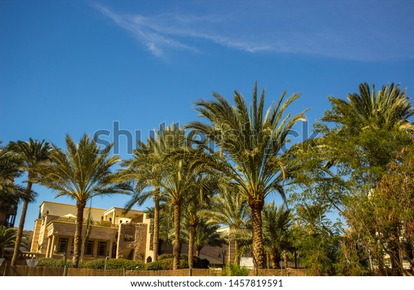 Middle East Hotel Tropic Garden Palm Stock Photo Edit Now 1457819591