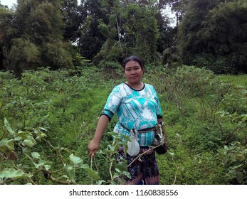 In The Middle Of The Field with Solanum Melongena Plants Bali, Indonesia