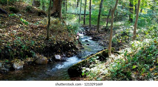 In the Middle of the Forest with Green Trees and a Running Stream; Peaceful and Tranquil Thoughts; Save the Planet, Save the Environment Ideas