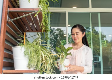 Middle-aged Asian woman is holding a plant pot to arrange a backyard.
