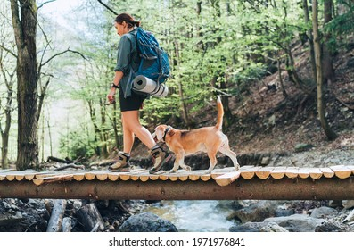 Middle-aged backpacker female with a backpack in trekking boots crossing mountain river bridge in the forest with her beagle dog. Traveling or trekking with pets concept image.