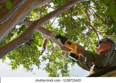 Middle-aged man trimming branches from a crape myrtle tree while standing on roof of house. Color, horizontal, room for text.