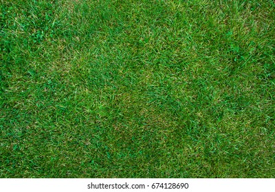 Mid-high lawn texture. Park lawn texture. Top view, overhead shot. Grassplot surface backdrop. Divet underlay, decorative background. Grass home screen. Green lawn desktop picture.