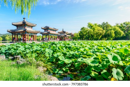 The Mid-lake Pavilion and a pond of lotuses. Located in Chengde Mountain Resort. It is a large complex of imperial palaces and gardens situated in the city of Chengde in Hebei, China.