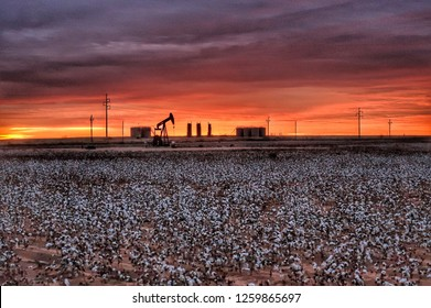 Midland Texas cotton field with pump jack at sunrise.