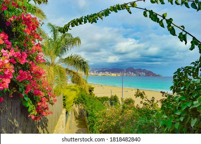 Mid-Mediterranean beach view on Costa Blanca with tropical plants and flowers.