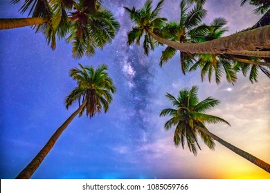 Midnight landscape with coconut palm tree Silhouette and Milky Way in the sky on a beautiful summer night. Long exposure photograph.