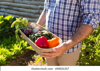 Mid-section of farmer holding a basket of fresh vegetables in vineyard