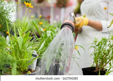 Midsection of female florist watering flower pots in greenhouse