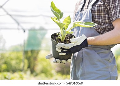 Midsection of gardener holding potted plant at nursery