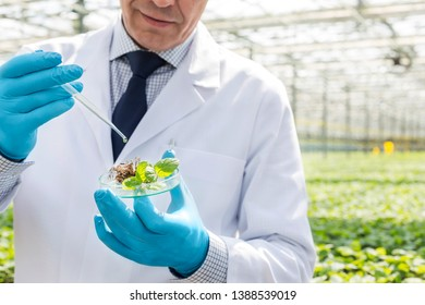 Midsection of male biochemist using pipette on seedling in petri dish at greenhouse