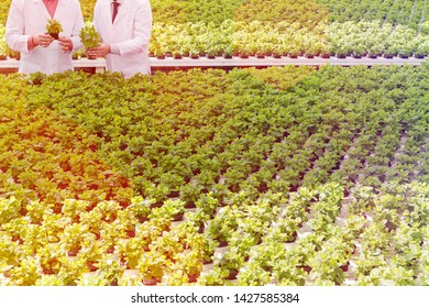 Midsection of male biochemists discussing over seedlings while standing in plant nursery
