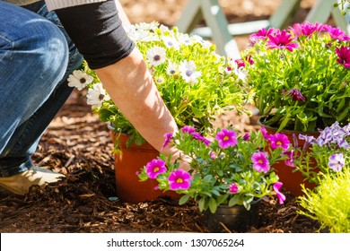 Midsection of a middle aged woman planting flowers in garden