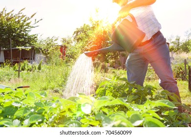 Midsection of senior man watering plants in allotment