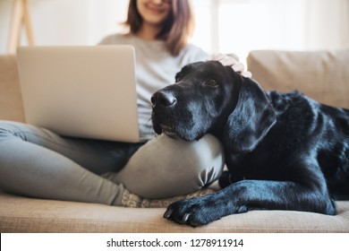 A midsection of teenage girl with a dog sitting on a sofa indoors, working on a laptop.