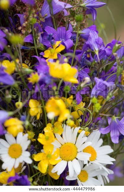 Midsummer Flowers Stock Photo Edit Now 444479986